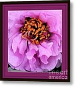 Framed In Purple - Abstract Floral Metal Print