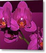 Framed Orchids Metal Print