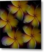 Frangipani Circle Of Color Metal Print