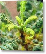 Frankincense Tree Leaves Metal Print