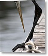 Fred The Great Blue Heron Metal Print