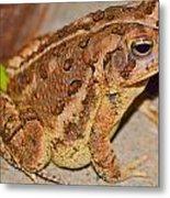Freddie The Frog Metal Print
