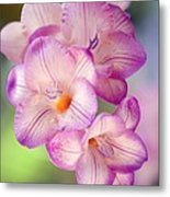 Freesia Sp Metal Print