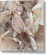 Freeze Dried Metal Print