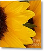 French Sunflowers Metal Print