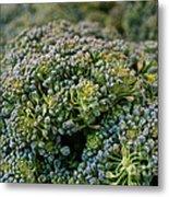 Fresh Broccoli Metal Print by Susan Herber