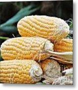 Fresh Corn Metal Print