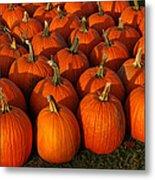 Fresh From The Farm Orange Pumpkins Metal Print