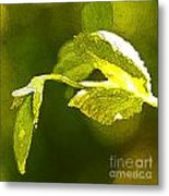 Fresh Peas Metal Print by Artist and Photographer Laura Wrede