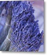 Fresh Russillon Lavende Metal Print