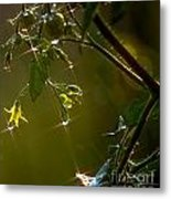 Freshly Showered Blossoms Metal Print