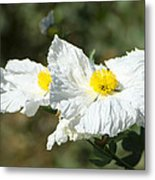 Fried Egg Flowers Metal Print
