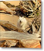 Friend Along The Way Metal Print