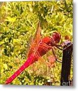 Friendly Dragon Fly Metal Print