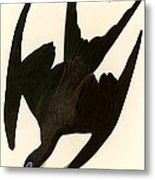 Frigate Bird Metal Print by Pg Reproductions