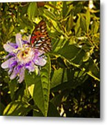 Fritillary On A Passion Flower  Metal Print