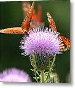 Fritillary Wings And Thistles Metal Print