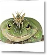 Frog And Grasshopper Metal Print