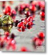 Frog At A Cape Cod Cranberry Bog Metal Print