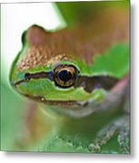 Frog Close Up 1 Metal Print