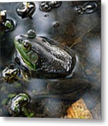 Frog In The Millpond Metal Print