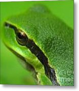 Frog Look Metal Print by Odon Czintos