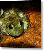 Frog Love Metal Print
