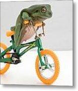 Frog On A Bicycle Metal Print