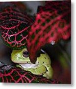 Frog On A Leaf Metal Print