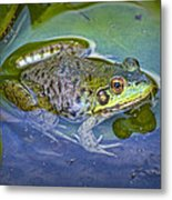 Frog Resting On A Lily Pad Metal Print