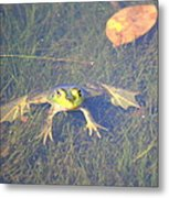 Froggie Sitting In The Water Metal Print