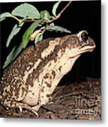 Froggy's Good Side Metal Print