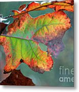 From Greeen To Rust Metal Print