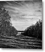 From The Woods Metal Print