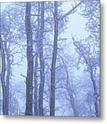 Frost Covered Trees In Fog, Alaska Metal Print