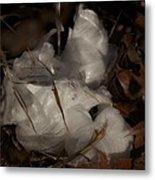 Frost Flower 1 Metal Print