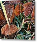 Frost On Leaves No. 2 Metal Print