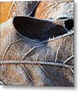 Frost On Oak Leaf Metal Print