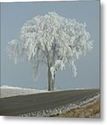 Frost On The Big Tree  Metal Print