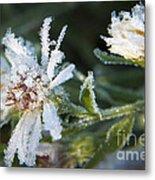 Frostbite Flower Metal Print by Darleen Stry