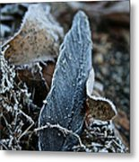 Frosted Feather Metal Print