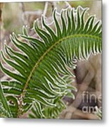Frosted Fern Metal Print