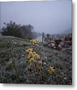 Frosted Flowers Metal Print
