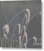 Frosted Grass In Fog Metal Print