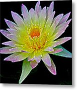 Frosted Lily Metal Print