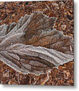Frosted Raspberry Leaf Metal Print
