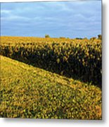 Frosted Soybeans Metal Print