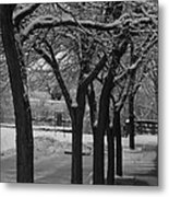 Frosted Trees Metal Print by Artist Orange
