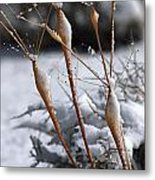 Frosted Trumpets Metal Print