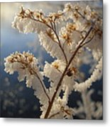 Frosty Dry Wood Aster Metal Print